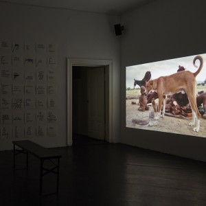 Steve Reinke, »The Genital is Superfluous«, installation view, Galerie Isabella Bortolozzi, Berlin, 12.02.16-09.04.16