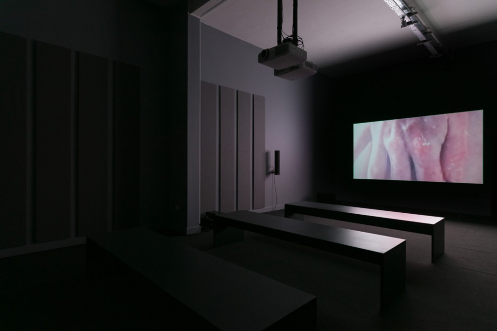 Installation view, James Richards, Migratory Motor Complex, Chapter Arts Centre, 2018